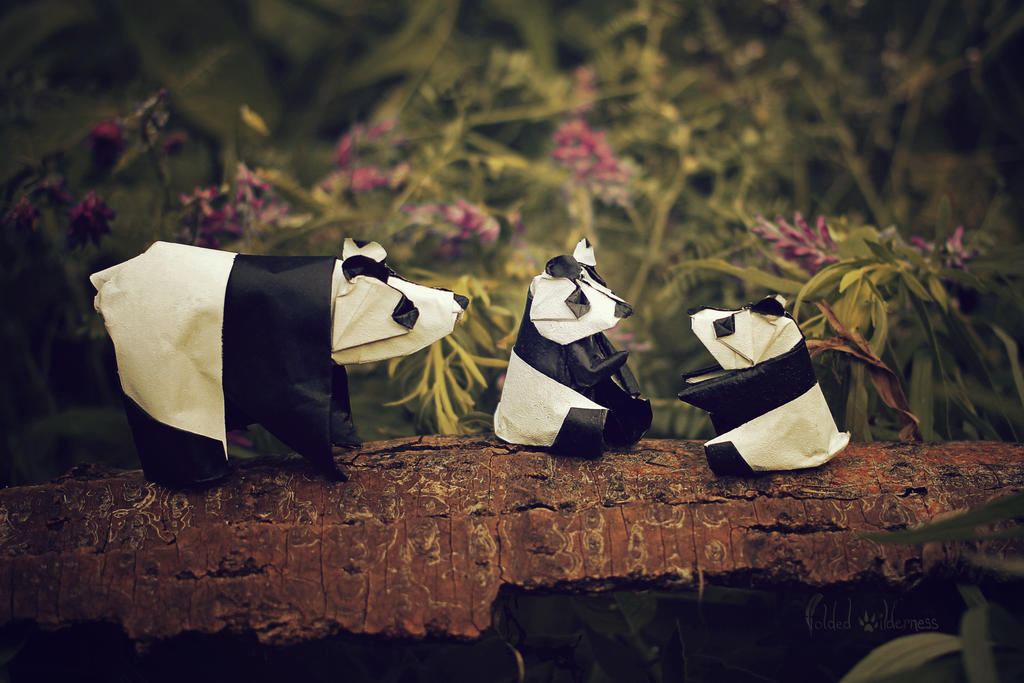 Origami Panda Family by FoldedWilderness