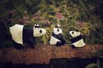 Origami Panda Family