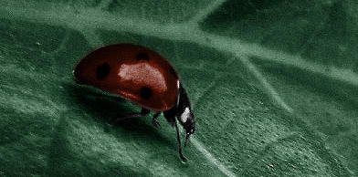 A Bug of a Different Color