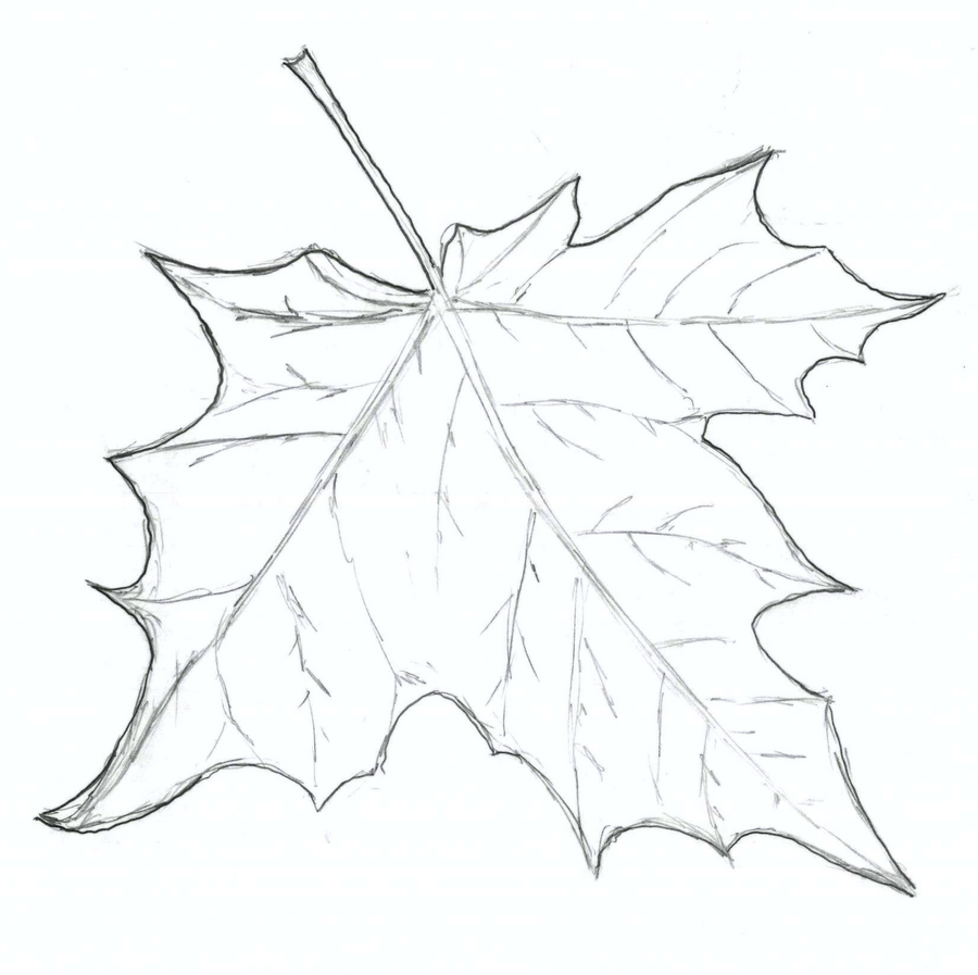 leaf sketch by pectwer on deviantart