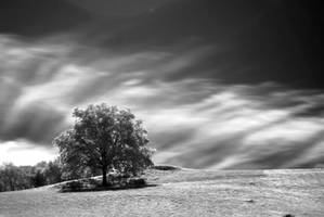 A Tree by LucAnthonyRossiter