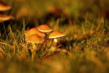 Mushroom by LucAnthonyRossiter