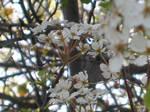 Epiphany White Spring Flowers