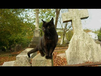 the black cat by Kokako