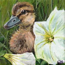Duckling Explorer by Kokako