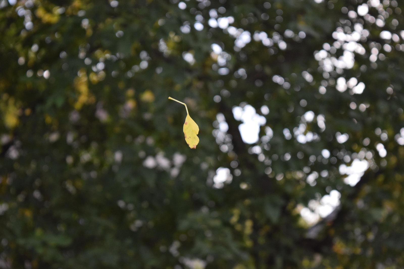 Leaf on the...Spider Thread by bluecuban