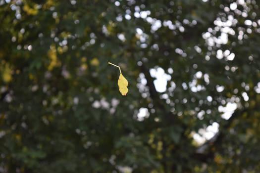 Leaf on the...Spider Thread