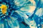 Blue Flower 1