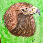 Golden Eagle on Canvas by coopofox
