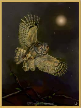 Painting Tawny Owl