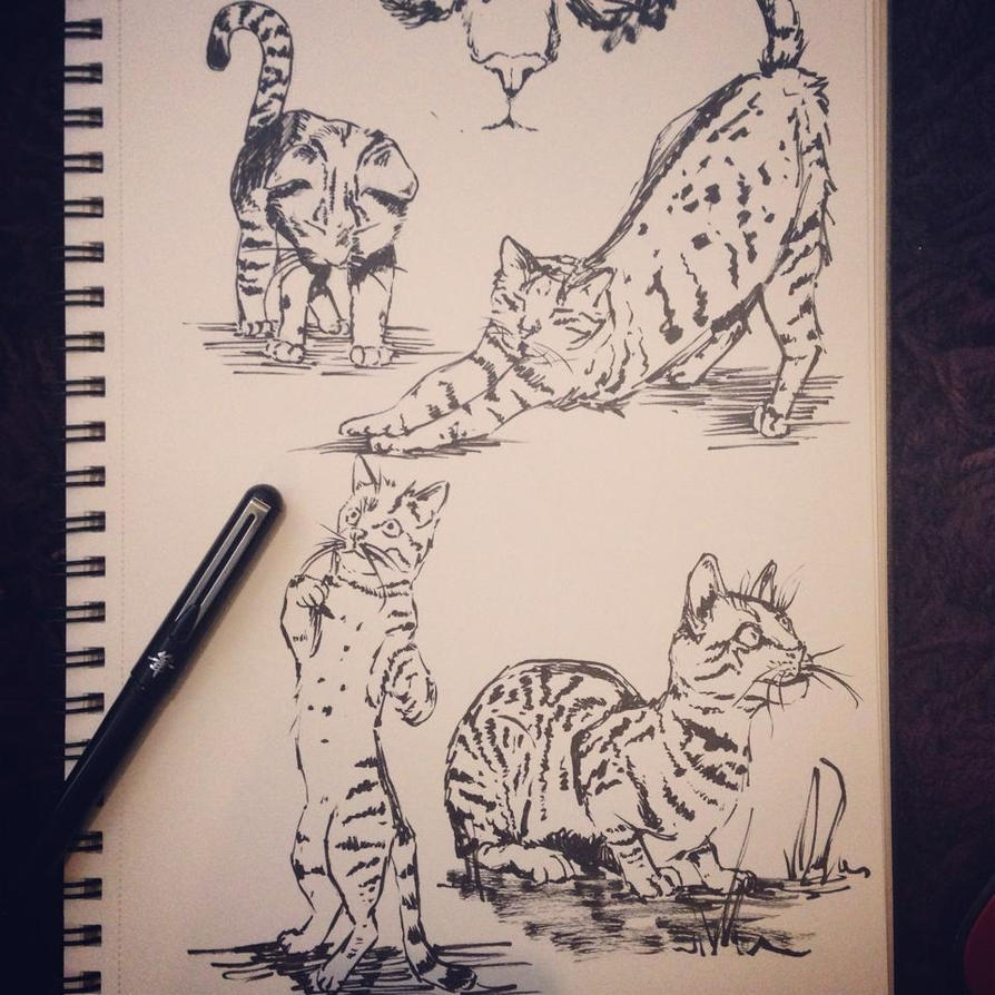 Cats! by babango