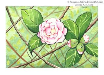 Camellia by Pequena-Artista