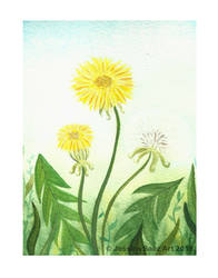 Dandelions by Pequena-Artista