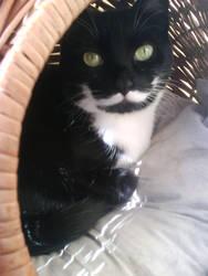 my little cat luni