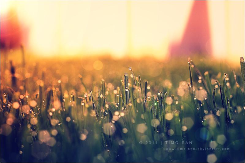 Morning Lemon... by Timo-San