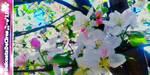 Blossom-Collage-Piece-no.1 by DulceataDeCires