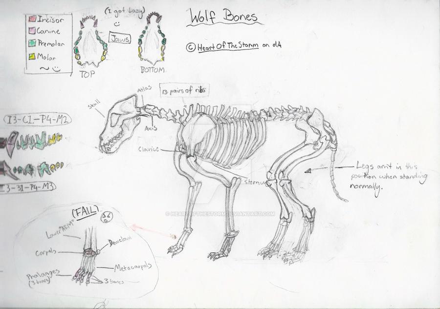 Diagram Of A Wolfs Anatomy - Application Wiring Diagram •