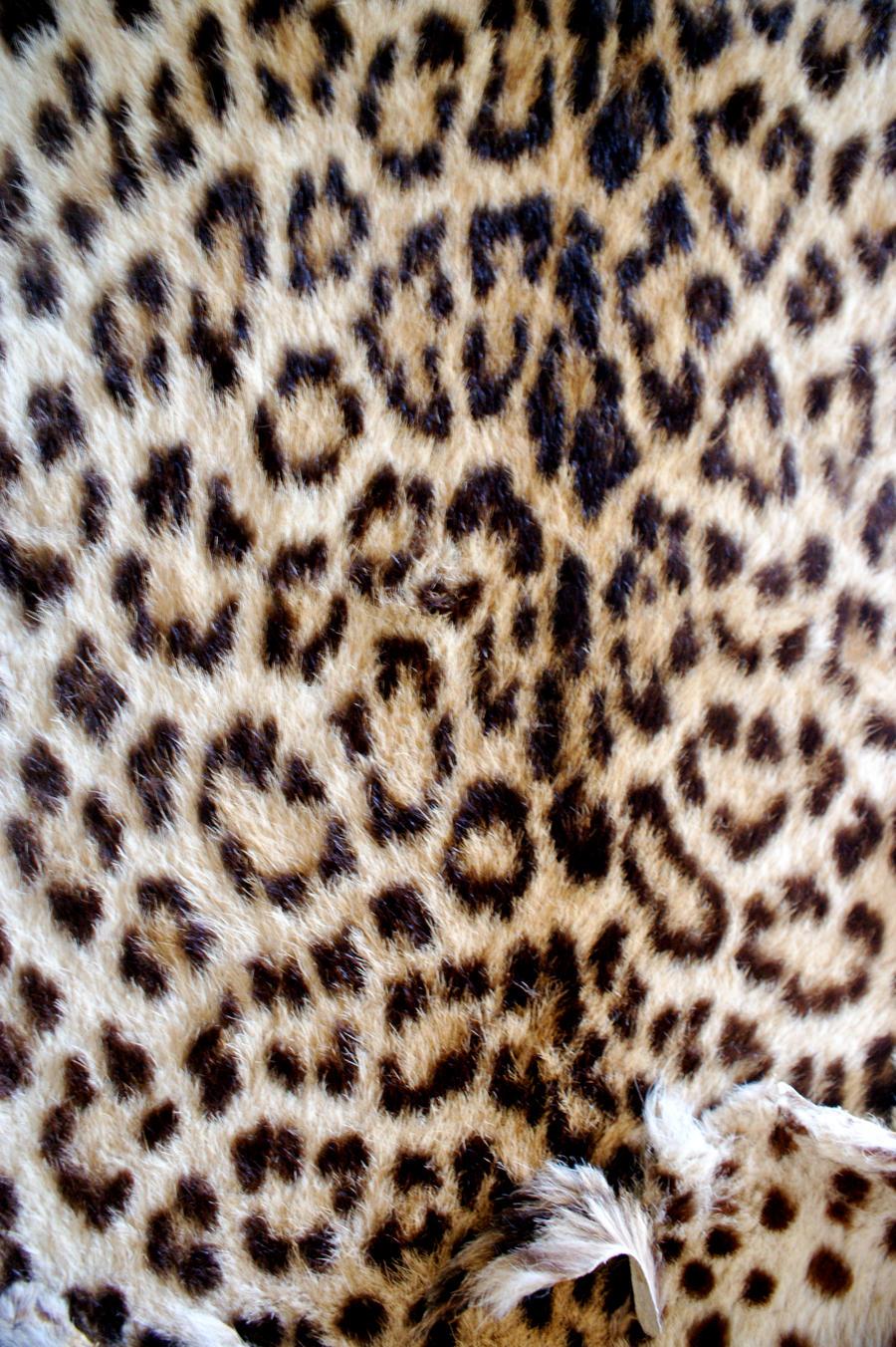 Detail of leopard fur. by LubelleCreativeSpark