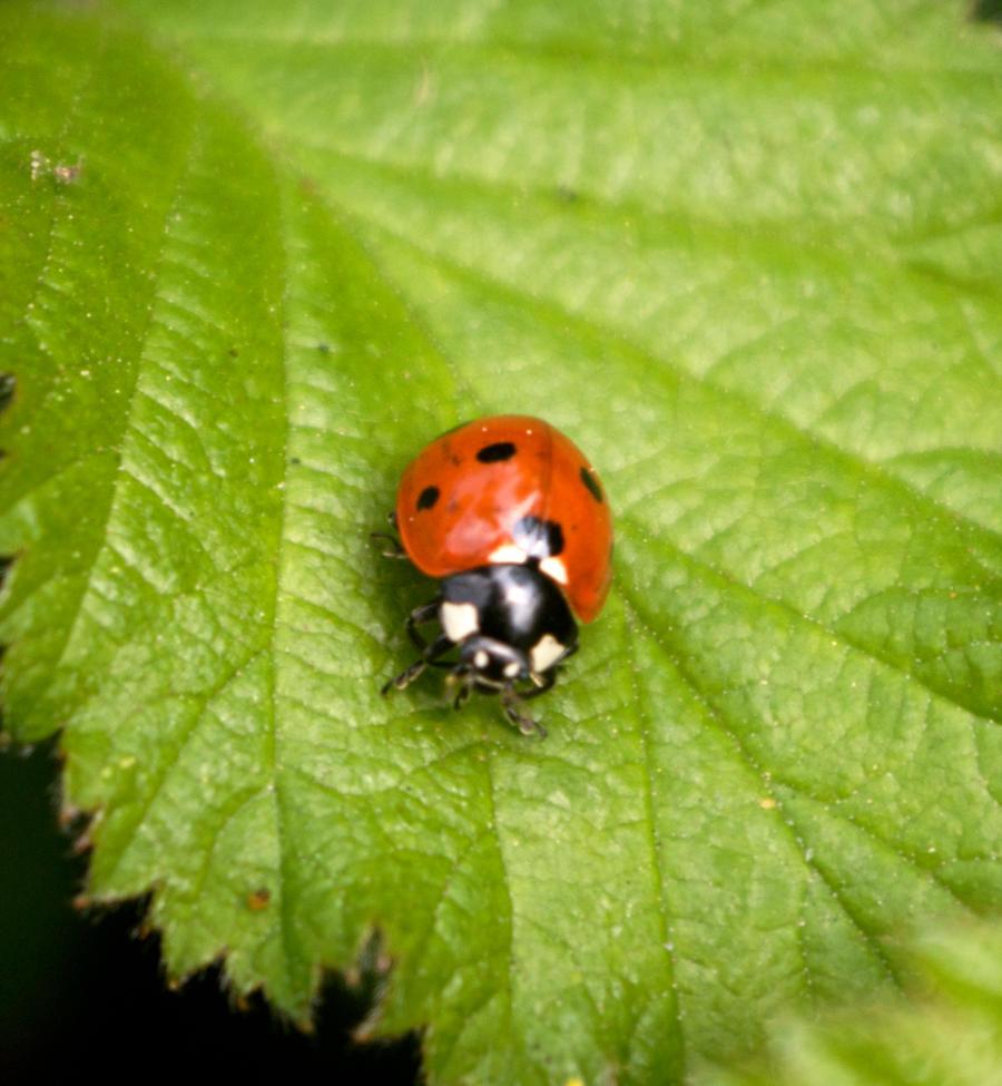 ladybird stk 2 by LubelleCreativeSpark