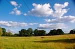 field background