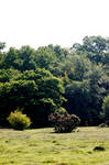 new Forest Backgrounds stk