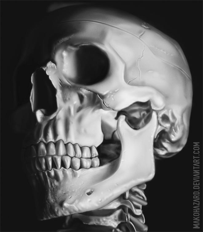 Skull-Study by JoelWhite