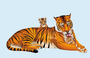 Tiger - Animal Book WORK