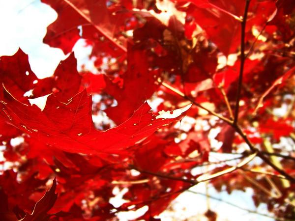 red 2 by PhotoBoothLoveXx