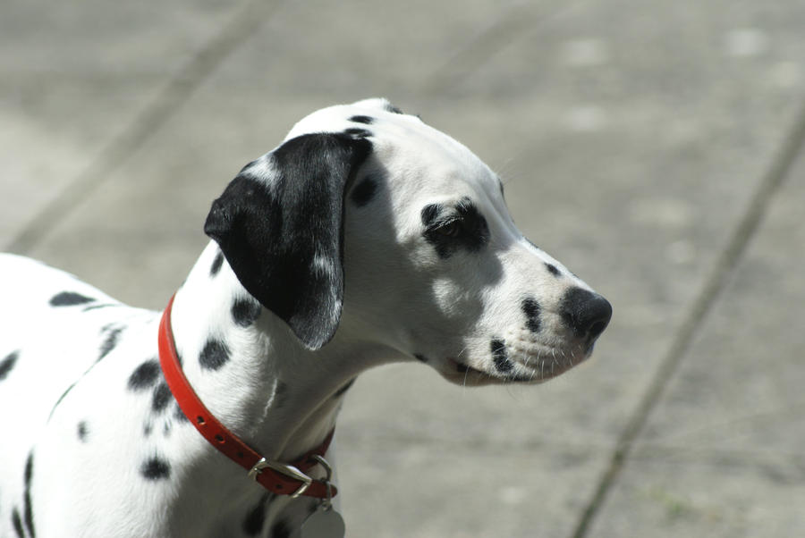 Charlie dog 2 by occypatchypony