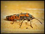 lady bug wannabe
