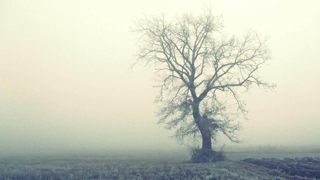 morning in turopolje by D-u-D