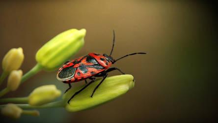 Pastel bug by D-u-D