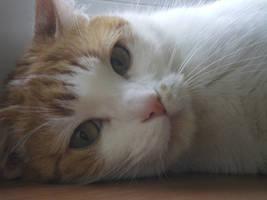 pussycat by EmilyEatworlD