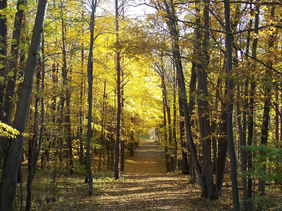 Autumn Lane by SamusAran28