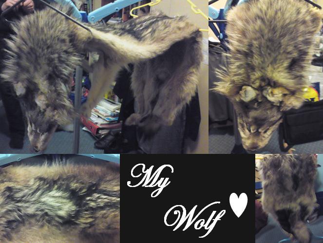 My Wolf by dragonslorefury