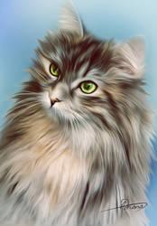Cat by Adriana-Madrid