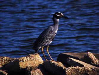 Bird by Arkadyonline
