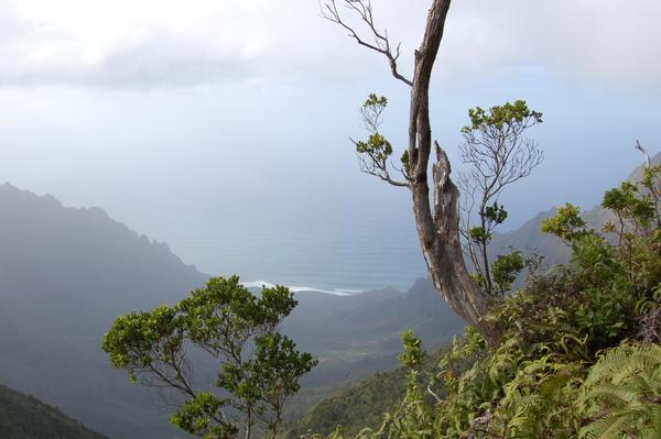 Waimea Canyon by EmberGryphon