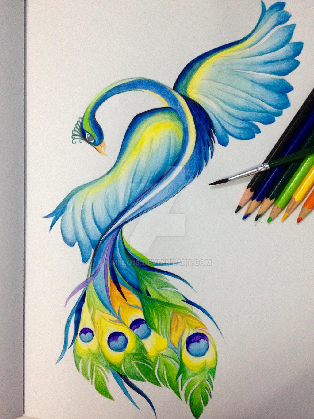 Peacock watercolor pencil