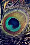 Eye Of Blu iPhone