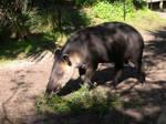 Tapir. by MissSparkle1