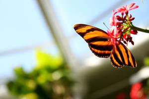 Breakfast For Butterflies