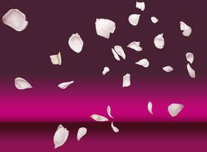 Last rose petals