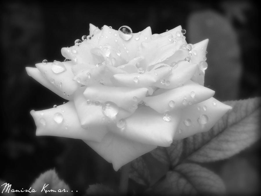 better in black n white... by MaNiShAmAnOj
