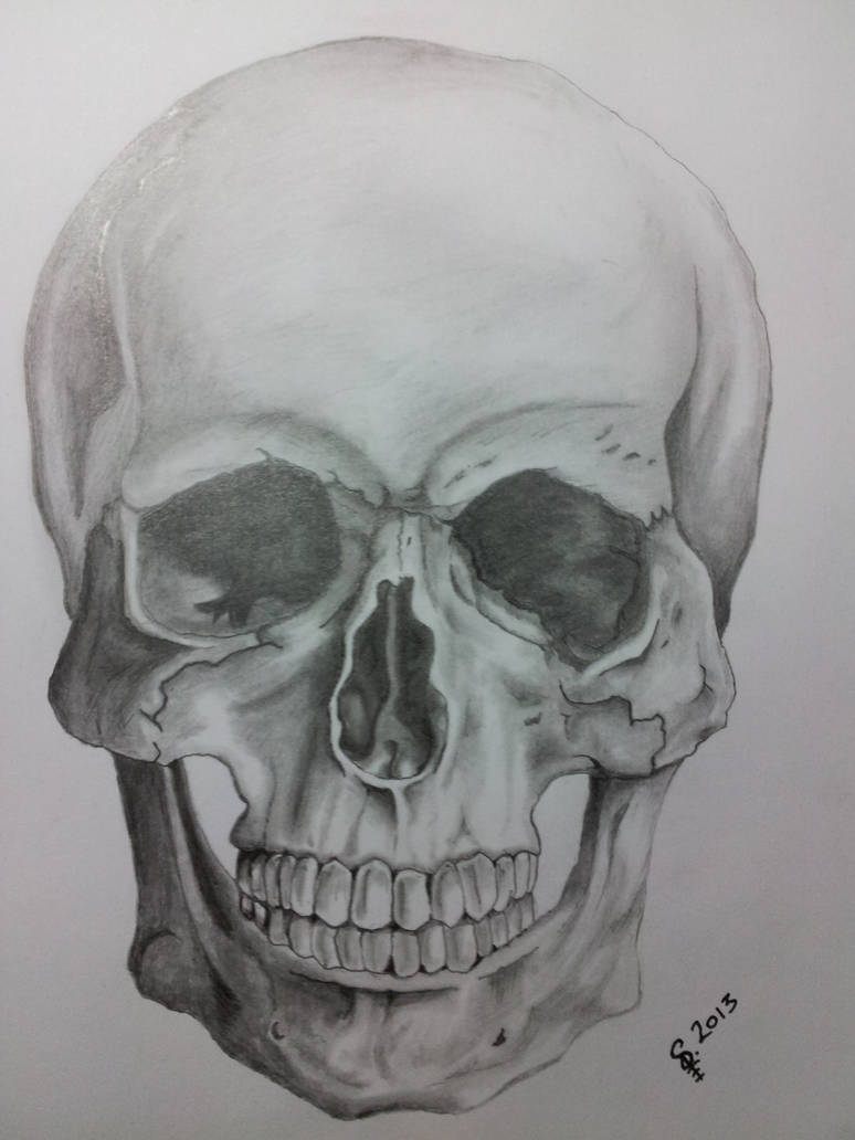 Skull pencil sketch by itchybear