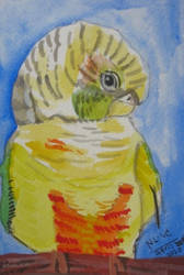 Untitled - Green Cheek Conure