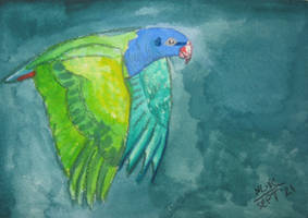 Wild Blue HeadedPionus by Vampiric-Conure
