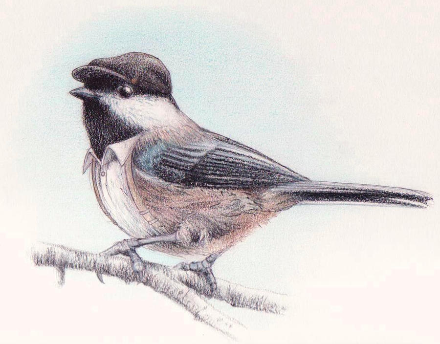 Black Capped Chickadee Drawing Black-capped chickadee byBlack Capped Chickadee Drawing