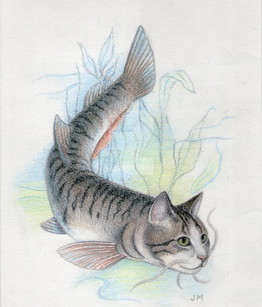 tabby catfish by jamiam100 on deviantart