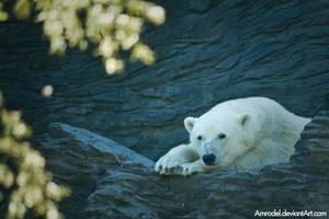 Polar Bear by amrodel